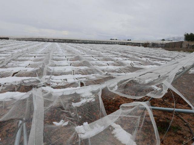 Agricultura remite el Ministerio el informe de daños en los cultivos por incidencias climatológicas adversas del pasado año, Foto 1