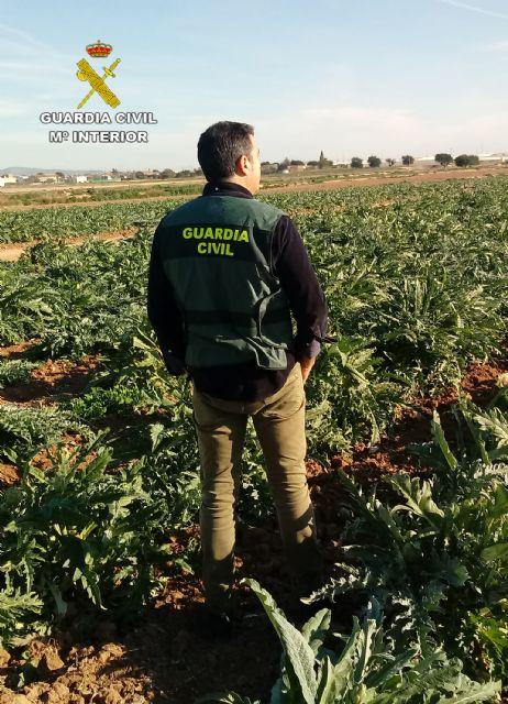 La Guardia Civil desmantela un grupo delictivo dedicado a la sustracción de alcachofa en Torre Pacheco - 3, Foto 3