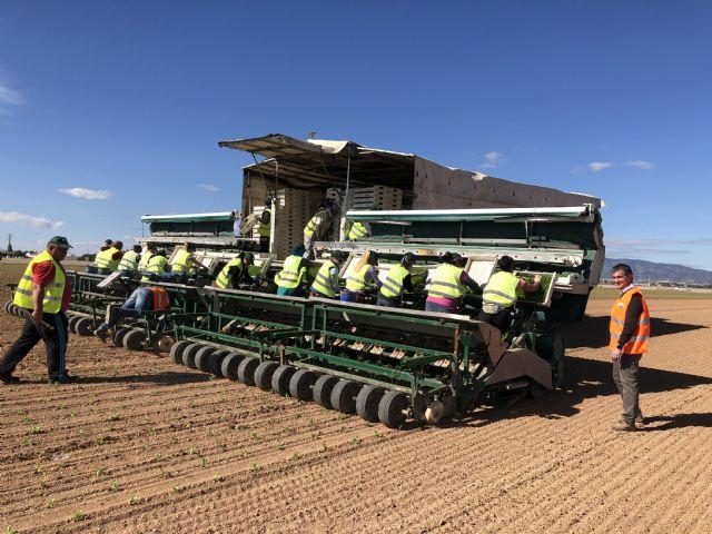 Una máquina pionera en el mundo acorta los tiempos de plantación de hortícolas, Foto 1