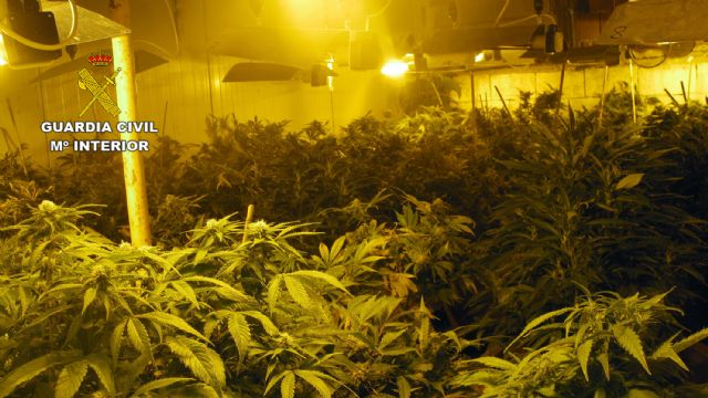 La Guardia Civil desmantela un invernadero dedicado al cultivo intensivo de marihuana