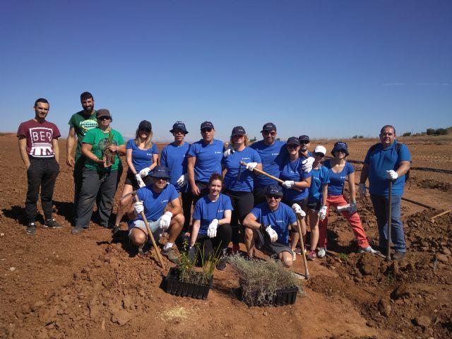 Los empleados de Hidrogea colaboran con ANSE plantando especies autóctonas para ayudar a frenar la aportación de nitratos al Mar Menor - 3, Foto 3
