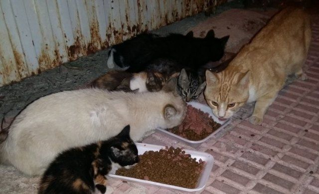 The collection service of abandoned, stray or stray animals is awarded