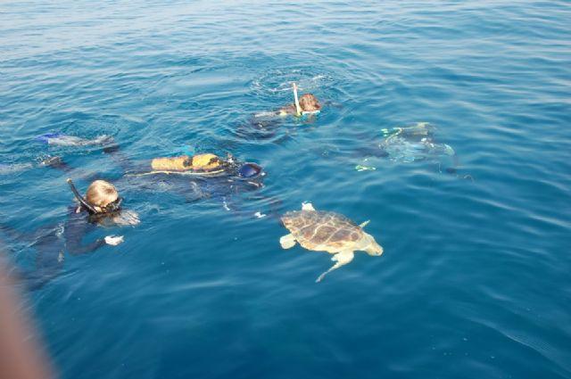 Una campaña de sensibilización explicará a bañistas y turistas cómo actuar si ven un intento de anidación de tortugas marinas - 1, Foto 1