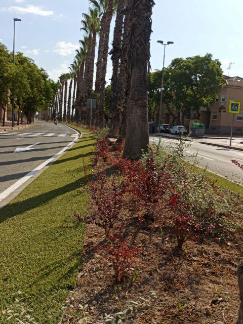 El Ayuntamiento aumenta la biodiversidad urbana y mejora la calidad ambiental gracias al Plan de Mejoras en Medianas y Rotondas - 1, Foto 1