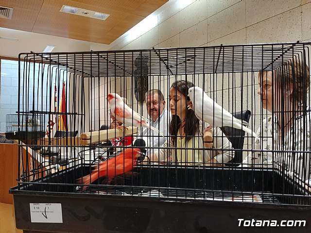 Totana hosts the 6th Murcian Regional Ornithological Championship