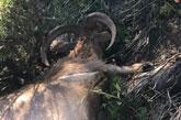 Sorprenden a cuatro cazadores furtivos en Sierra Espuña