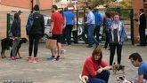 El PP denuncia que el PSOE ha activado el 'copiar y pegar' con las medidas Ayuntamiento de Alcantarilla en materia de protección animal