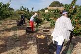 Entregan a Cáritas de Totana los albaricoques recolectados en el Centro de Demostración Agraria Lomo de las Suertes