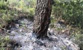 Efectivos del Plan Infomur se encuentran trabajando en un incendio forestal declarado en el paraje 'El Carretero', en Totana