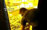 La Guardia Civil detiene a un vecino de Totana que ocultaba una plantación de marihuana en un establecimiento de compra-venta de coches usados
