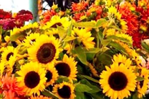 Agricultura, Pesca y Alimentación abre una consulta pública sobre las ayudas a productores de flor cortada y planta ornamental - 1, Foto 1