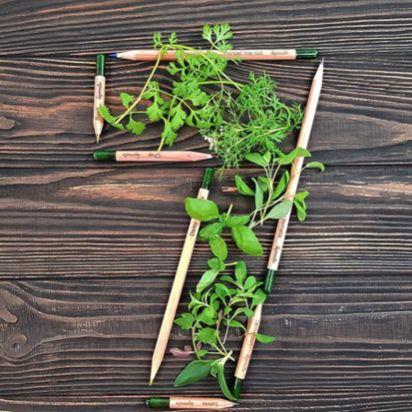 Sprout World cumple 7 años con 30 millones de lápices plantables vendidos en 80 países - 1, Foto 1