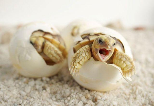 Juan Ferri en favor de la Conservación de Tortugas durante 2020 - 1, Foto 1
