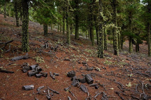 España se suma junto a otros 8 países europeos a la Declaración de Ambición 2025 para reforzar la cooperación contra la deforestación - 1, Foto 1