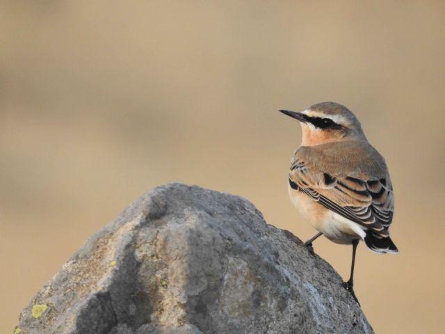La Sierra Norte de Guadalajara es un paraíso ornitológico - 1, Foto 1