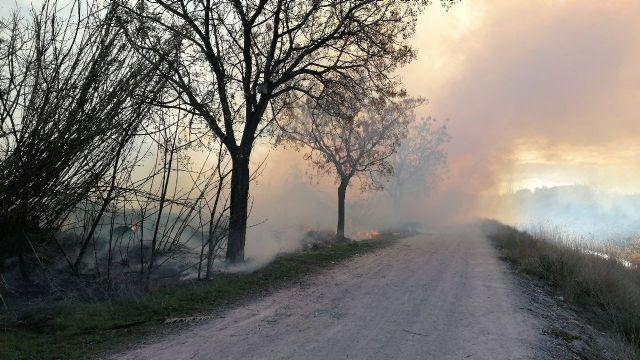 Incendio de vegetación en los márgenes del río Segura, en Puebla de Soto - 1, Foto 1