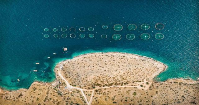 La empresa española AIS Group desarrolla un sistema de IA para el control de algas nocivas - 1, Foto 1