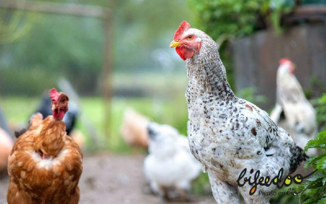 Pienso ecológico, una gran opción para las granjas según Bifeedoo - 1, Foto 1