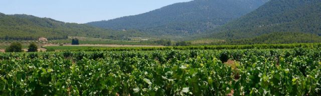 Bullas es poesía para los amantes del vino - 2