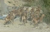 APESE y COAG votan en contra del presupuesto del Parque de Sierra Espuña para 2015