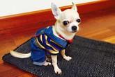 Ofrecen una recompensa de 2.000 € al que encuentre a un perrito perdido por el barrio de San José de Totana