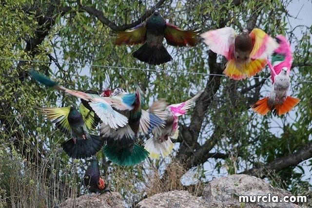 Se prohibe el vuelo de palomas no destinadas a la práctica deportiva durante la celebración de entrenamientos y competiciones oficiales de colombicultura, Foto 1