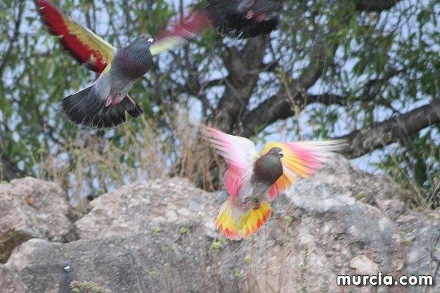 Se prohibe el vuelo de palomas no destinadas a la práctica deportiva durante la celebración de entrenamientos y competiciones oficiales de colombicultura, Foto 2
