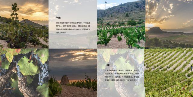 La DOP Jumilla presenta sus canales de comunicación en China - 5, Foto 5