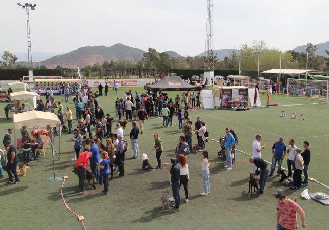 Más de 300 ejemplares de 50 razas en el VII Concurso Nacional Canino Ciudad de Puerto Lumbreras - 3, Foto 3