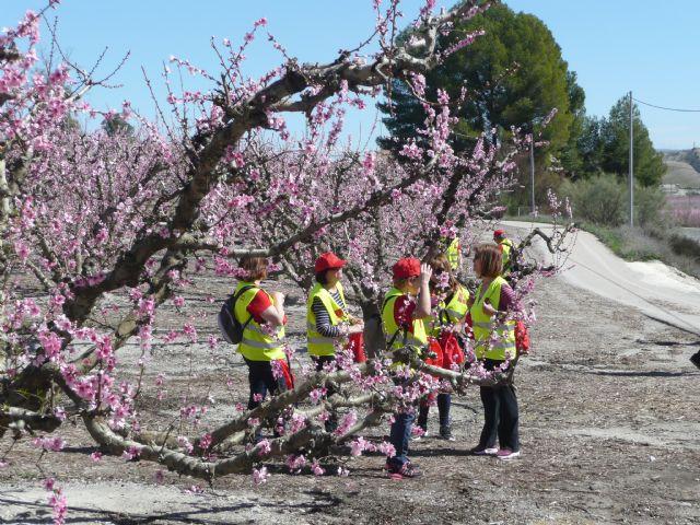 Más de 150 participantes de los Grupo 4-40 visitaron este sábado la floración de Cieza con motivo del VI encuentro que organiza el Servicio de Salud - 1, Foto 1