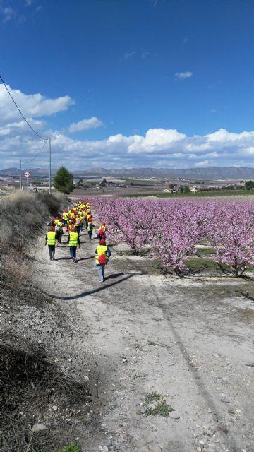 Más de 150 participantes de los Grupo 4-40 visitaron este sábado la floración de Cieza con motivo del VI encuentro que organiza el Servicio de Salud - 3, Foto 3