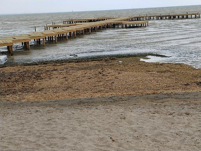 Denuncia de la presencia de un gas tóxico en la playa de los urrutias, por la materia acumulada - 2, Foto 2