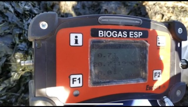 Denuncia de la presencia de un gas tóxico en la playa de los urrutias, por la materia acumulada - 4, Foto 4