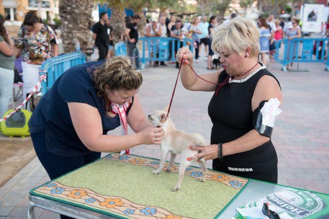 Numeroso público disfruta del elevado nivel de participación en el vi concurso nacional canino de Mazarrón, Foto 1