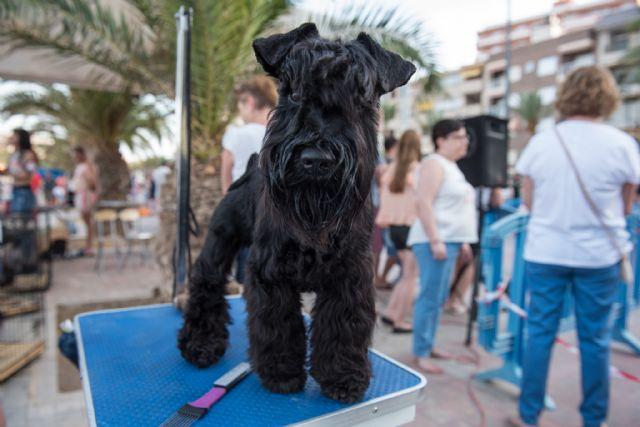 Numeroso público disfruta del elevado nivel de participación en el vi concurso nacional canino de Mazarrón, Foto 2