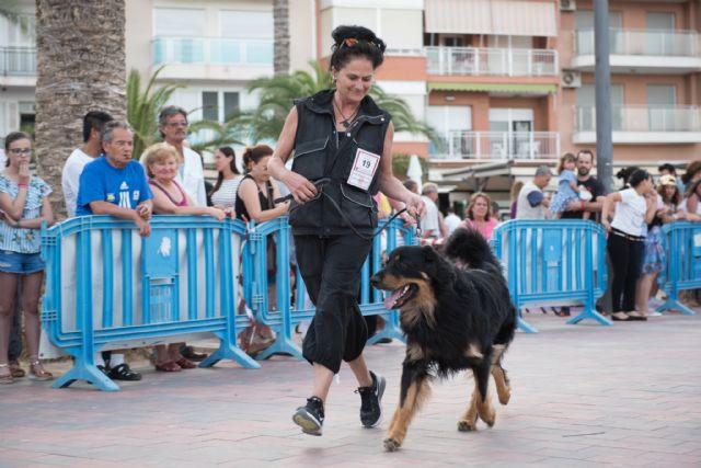 Numeroso público disfruta del elevado nivel de participación en el vi concurso nacional canino de Mazarrón, Foto 3