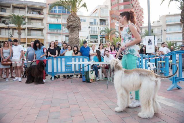Numeroso público disfruta del elevado nivel de participación en el vi concurso nacional canino de Mazarrón, Foto 4