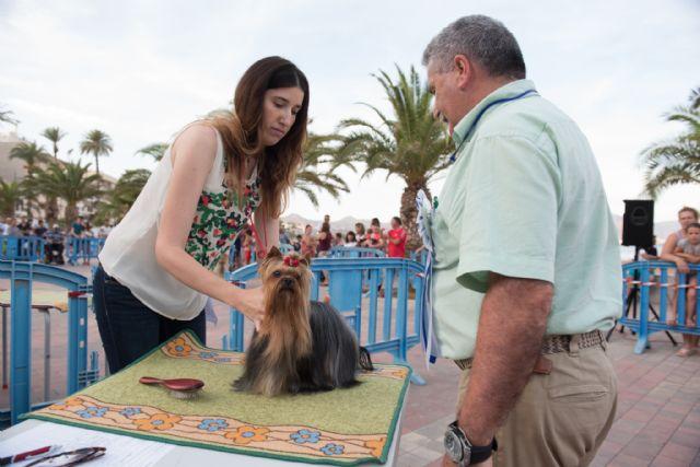 Numeroso público disfruta del elevado nivel de participación en el vi concurso nacional canino de Mazarrón, Foto 5