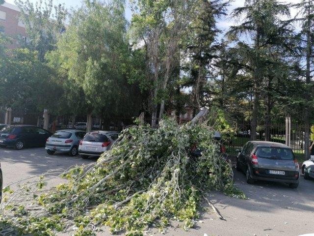 """[Se cierra y desaloja el parque municipal """"Marcos Ortiz"""" por la caída de un árbol a consecuencia de los efectos del viento, que ha dañado dos vehículos"""