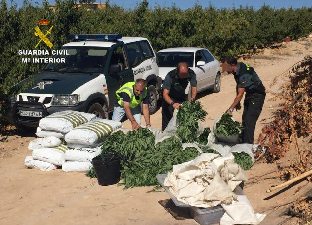 La Guardia Civil desmantela una plantación con más de 2.000 plantas de marihuana en Ulea - 1, Foto 1