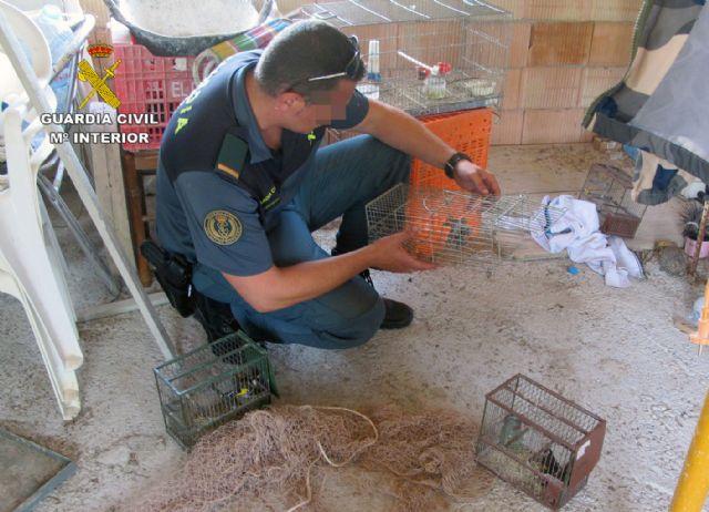 La Guardia Civil detiene/investiga a dos personas por la captura y posesión ilícita de jilgueros, Foto 2
