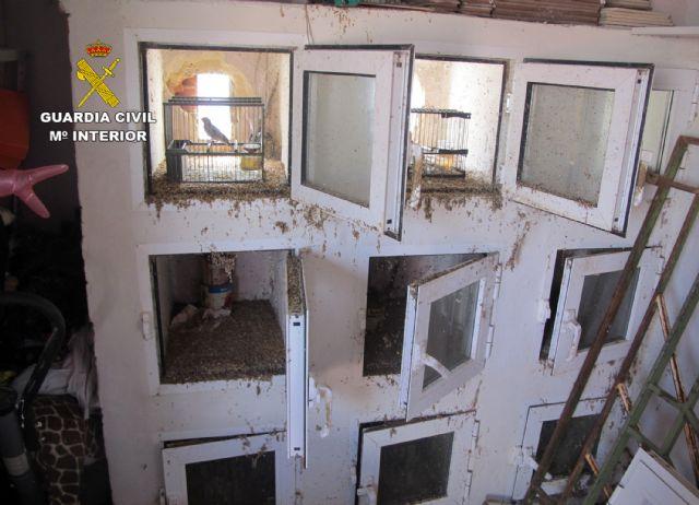 La Guardia Civil detiene/investiga a dos personas por la captura y posesión ilícita de jilgueros, Foto 3