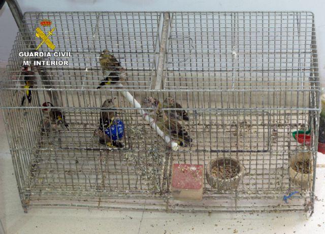 La Guardia Civil detiene/investiga a dos personas por la captura y posesión ilícita de jilgueros, Foto 4