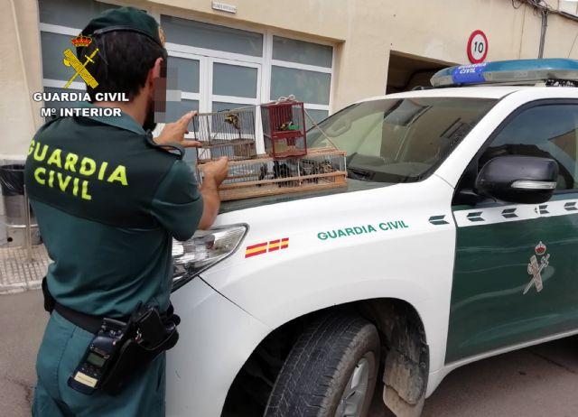 La Guardia Civil detiene/investiga a dos personas por la captura y posesión ilícita de jilgueros, Foto 7