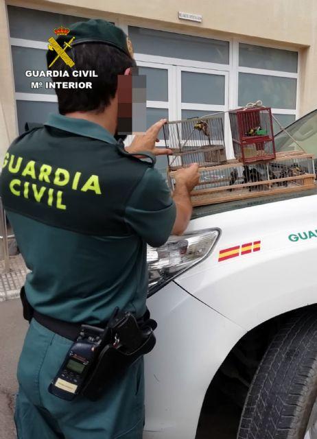 La Guardia Civil detiene/investiga a dos personas por la captura y posesión ilícita de jilgueros, Foto 8