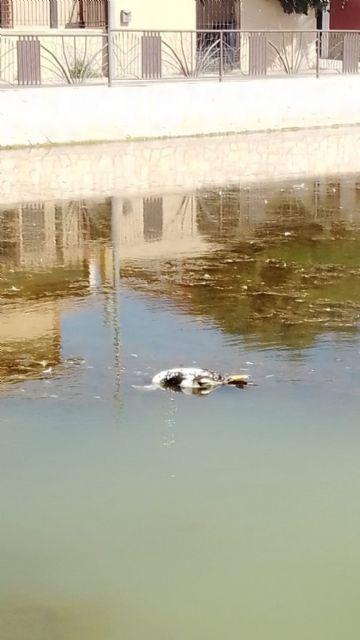 IU-Verdes alerta de un episodio de anoxia en el estanque de Doña Inés que está acabando con su fauna - 1, Foto 1
