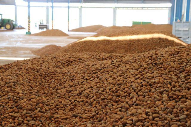 La campaña de la almendra está finalizando en Vega de Pliego con muy buena calidad del producto - 1, Foto 1