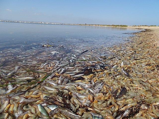 Podemos lamenta que dos años después de la anoxia de 2019 el gobierno regional siga bloqueando la regeneración del Mar Menor - 1, Foto 1