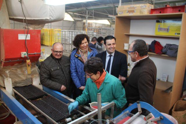 La alcaldesa y el director general del SEF visitan la empresa agrícola PlantiAgro que genera un centenar de empleos al año - 1, Foto 1