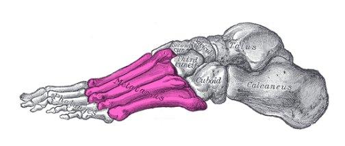 La metatarsalgia es uno de los dolores más comunes en el pie - 1, Foto 1